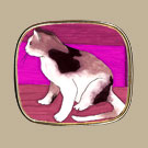 Cat on Pink Pin
